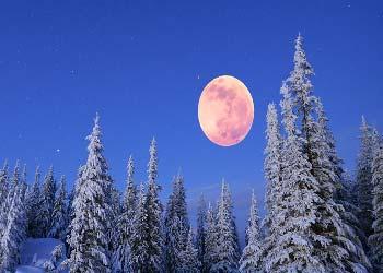 полная Луна в зимнем лесу