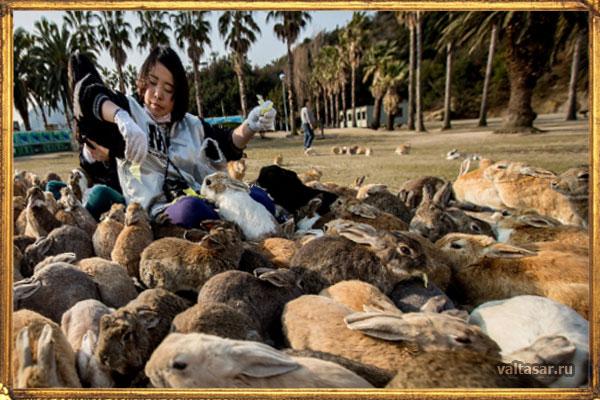 остров Окуносима - рай для кроликов